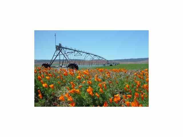 Finca agrícola  Venta 16 000 €  (P1042)